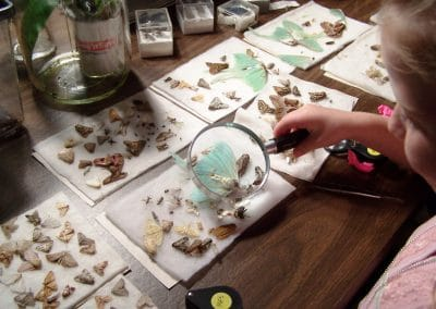 Childlooking at insects under a magnifying lens